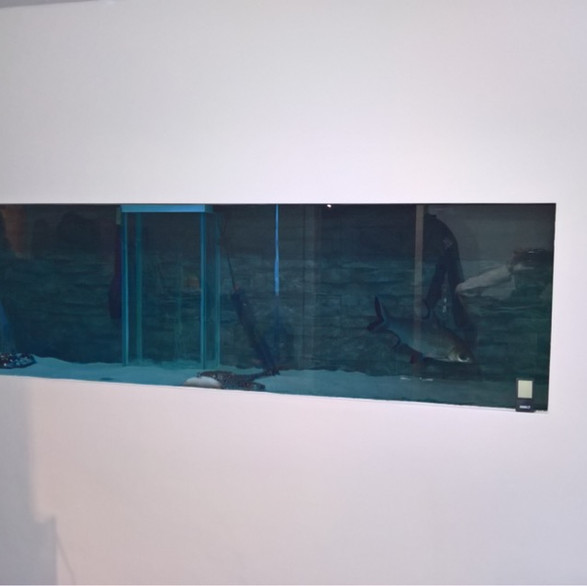 tropical fishtank boarded and plastered