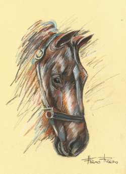 Croqui de Cavalo
