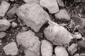 Fish and stones #8