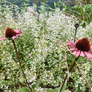 De bloeiende tuin