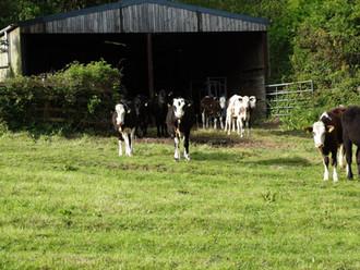 Poole Farm Visit