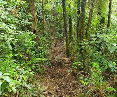 Te Araroa: Day 5-8