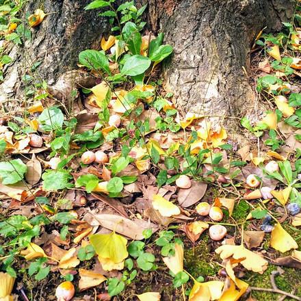 渋谷に秋の香りPart2