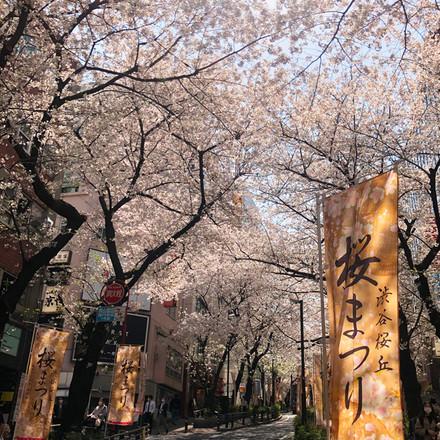 渋谷桜丘さくら祭り🌸ライトアップ