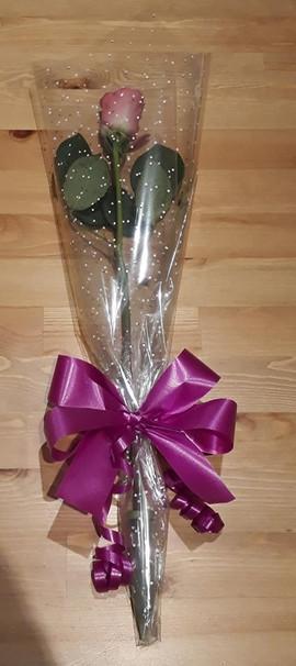 pink single rose - fresh flowers