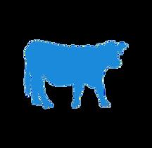 beef cattle borderless-cenzone europe.pn