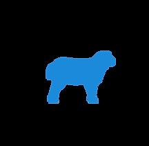 sheep - cenzone europe.png