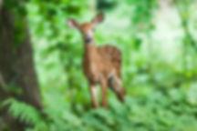 wildlife-1367217_1920.jpg