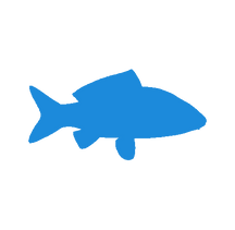 fish - cenzone europe.png