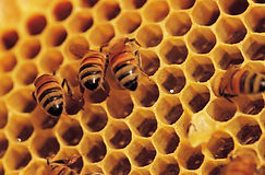 There Is More To Honey Than  Sweet. http://www.forgetthepain.com/#!there-is-more-to-honey-than--sweet/cpil