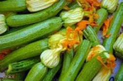 Zucchini is one of the most prolific plants in the gardening world. Easy to grow and loaded with nutrients.