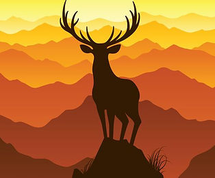 stag cool animals.jpg