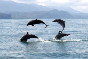 delfines-manchados (1).jpg