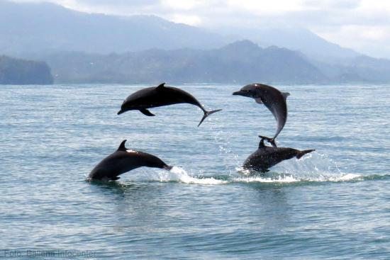 delfines-manchados.jpg