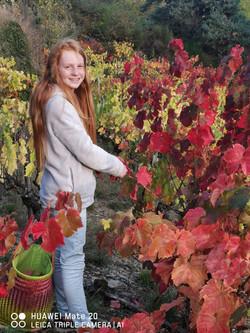 Vignes rouges_La Grange Ô Tisanes-Conque