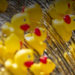 THE GREAT RUBBER DUCKY RACE