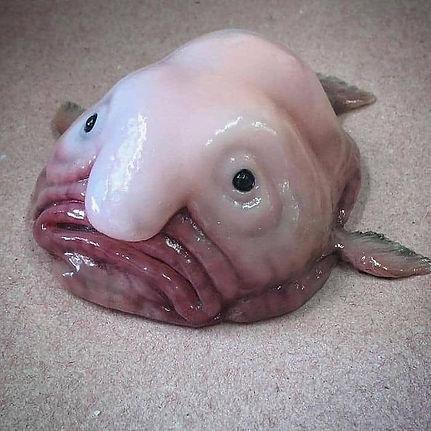 blobfish.jpg