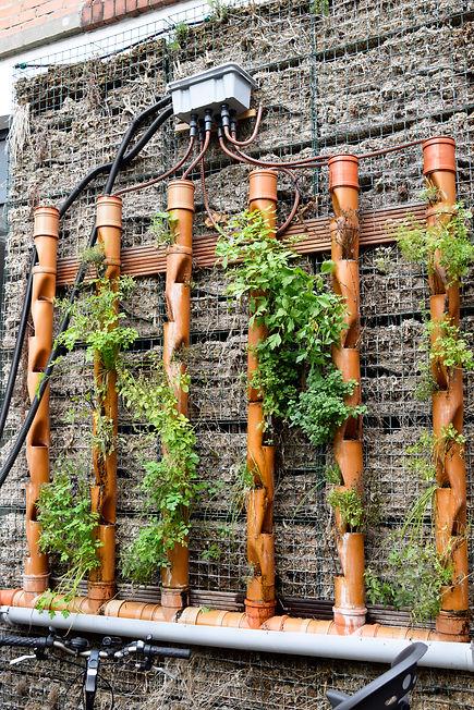 Installations d'aquaponie et de cultures d'aromates verticales