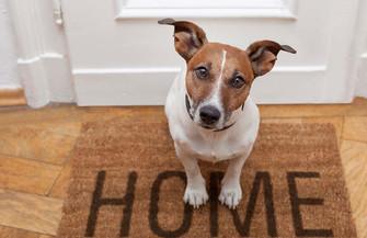 Pets em casa e o piso ideal !!