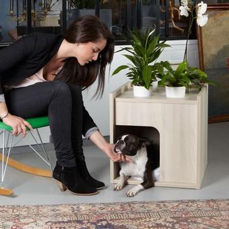 10 caminhas de design para seu pet !!