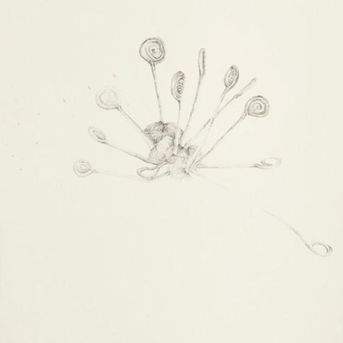 Temitayo Ogunbiyi, 2020, You will find new direction from suprises, mine de plomb sur papier herbarium, 29,2 x 41,9 cm