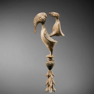 Oiseau Baga, Guinée - Charles-Wesley Hourdé