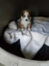 Dixie at 5 weeks.jpg