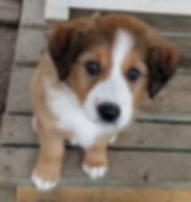 Fina Sophie at 7 weeks.jpg