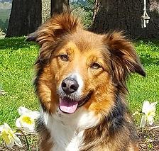 Pixie Spring Face.jpg