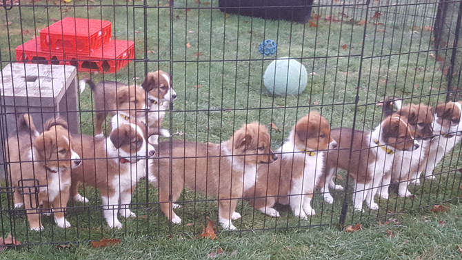 Puppies in Retrospect