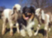 Wyeths and the Newbs 1.jpg