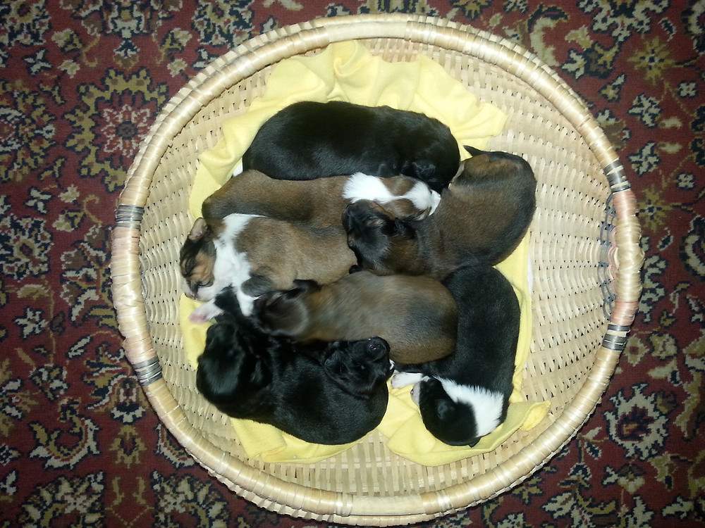 Basket O Puppies.jpg