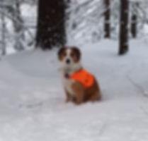 Dixie 6+ months first snow_edited.jpg