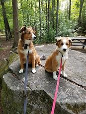 Dixie and Ginger - Mt. Blue  9-7-19.jpg