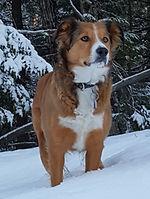 Ginger Snow Cropped.jpg