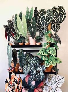 plants 1.jpeg