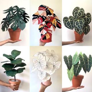plants 2.jpeg
