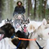 Husky_ride.jpg