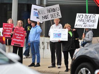 Protesters urge City to call off the deer cull