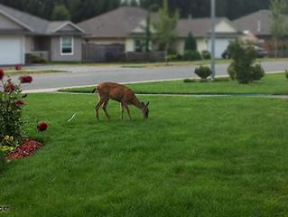 """Deer Doctor"" gardening expert coming to Ann Arbor"