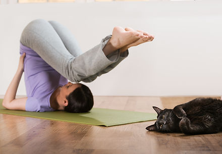 yoga_cat.jpg