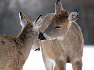 """Deer cull """"poorly planned"""""""