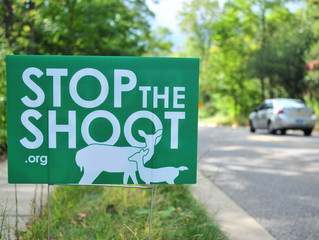 Ann Arbor deer cull controversy becomes election issue in 2nd Ward