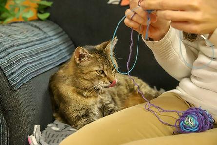 Knitty Kitty - Babs 3.jpg