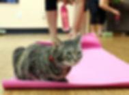 yogacat-small.jpg