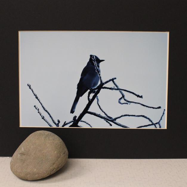 Blue Jay on Iced Twig