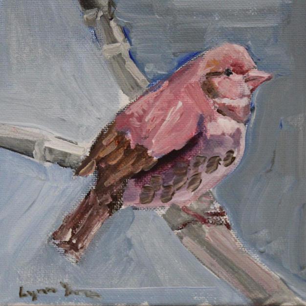 Pink Songbird