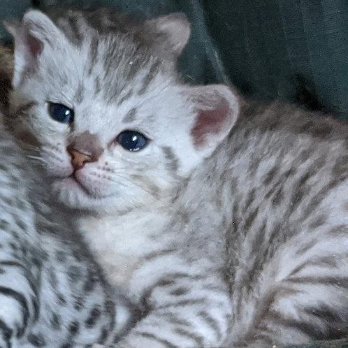 F5 Kitten Deposit