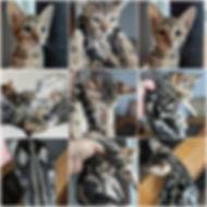 BeFunky Ellie Collage.jpg