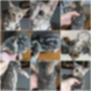BeFunky Eggplant Collage.jpg